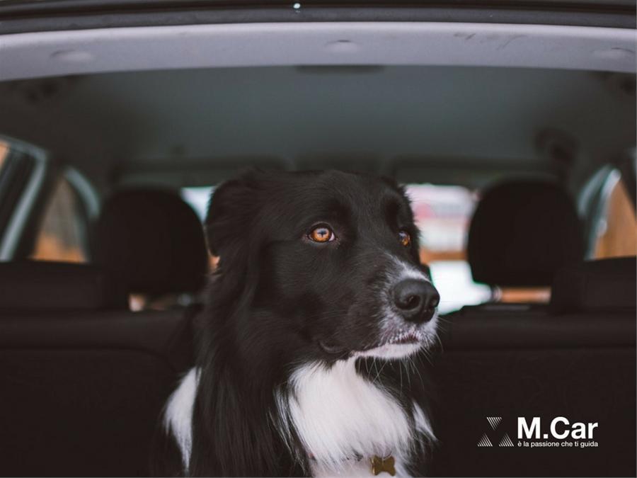 maggiore sconto di vendita ottenere a buon mercato dopo Come Trasportare il Cane in Auto secondo la Legge - M.Car